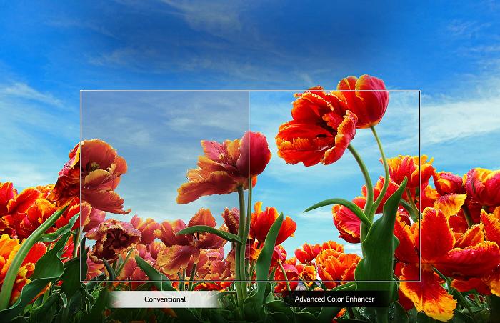 Tivi LG Smart Simple HD 43 Inch 43LN5600